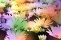 White daisies background Stock Photos