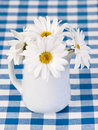 White daisies in the pot Royalty Free Stock Image