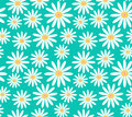 White daisies on turquoise background seamless vector pattern