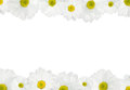 White daisy background flower spring with copy space Stock Photo