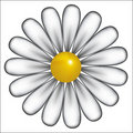 White daisy background, vector Stock Images