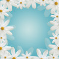 White daisy beautiful frame Royalty Free Stock Photo
