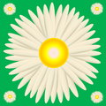 White daisy big surrounded by small ones in green background Royalty Free Stock Photos