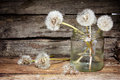 White dandelions still life with on the rural background Royalty Free Stock Photo