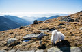 White dog and Low Tatras mountains, hiking theme