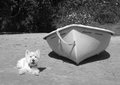 White dog next to a rowing dinghy on a beach Royalty Free Stock Photo