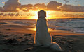 White dog sitting on sandy beach watching sunset. Royalty Free Stock Photo