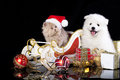 White dog spitz and kiten persian wearing a santa hat cat Stock Photography