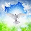 White dove flies in skies Royalty Free Stock Photo