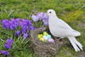 White dove nest colored eggs Stock Photo