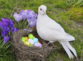 White dove nest colored eggs Stock Image