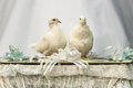 White doves in love Royalty Free Stock Photos