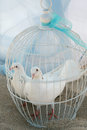 White doves pigeon in a cage Royalty Free Stock Image