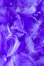 White downy feathers Royalty Free Stock Photo