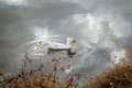 A white duck with a tuft of molting feathers on head the top his the is swimming in pond reflecting cloudy sky Royalty Free Stock Image