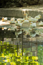 White ducks resting in a shade by a pond on summer day hot Stock Photography