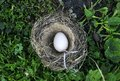 white eggs of different colors lie in the nest on the l Royalty Free Stock Photo