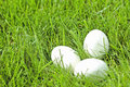 White eggs laying in grass Stock Photography