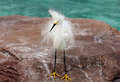 White egret portrait of an taken in san diego Stock Photo