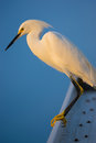 White Egret on the roof Royalty Free Stock Photo