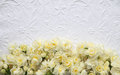 White embossed background with yellow flowers Royalty Free Stock Image