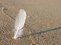 White feather in the sand Stock Images