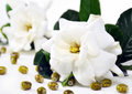 White flower with beads Royalty Free Stock Photo