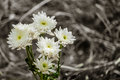 White Flower Bloom And Blur Gr...