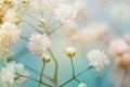 White Flower On Blue Background.