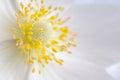White flower , close-up