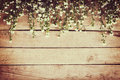 White flower on grunge wood board background with space. Royalty Free Stock Photo