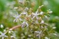 White flower moss Royalty Free Stock Photo