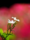 White flower outdoor natural background