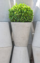 White flower pots and green plant Royalty Free Stock Image