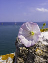 White flower in the rock at sea background Stock Image