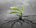 White flower sprout grows through asphalt Royalty Free Stock Photos