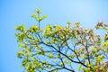 White flowering dogwood tree in bloom in sunlight
