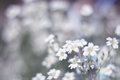 White flowers on a beautiful background. An artistic image. Selective focus