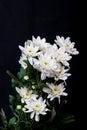 White Flowers On Black Backgro...