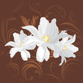 White flowers on the brown ornamental background illustration Stock Image