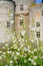 White flowers in front of medieval castle Stock Photography