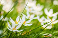 White flowers on green background Stock Photos