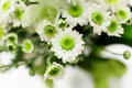 White flowers green stamen Royalty Free Stock Photography