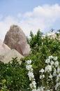 White Flowers, Red Rose Valley, Goreme, Cappadocia, Turkey