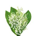 White flowers lilies of the valley isolated on white Royalty Free Stock Photo