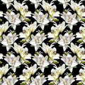 White Flowers of Lily, Madonna Lily. Seamless floral pattern on black background.