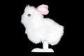 White Fluffy Bunny Toy, Side Stock Photos