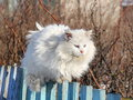 White  fluffy cat is on a fence Stock Photos