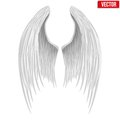 White folded angel wings vector illustration isolated on background Stock Photos