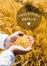 White fourth of July graphic in circle against cornfield and hands filled with corn Royalty Free Stock Photo